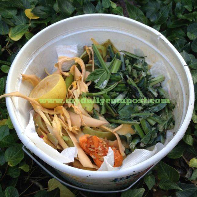 kale & squash bucket 10.5.13