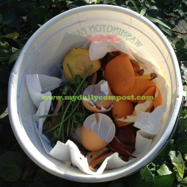 Chives, orange peels, eggs ... no clue what this bucket produced.