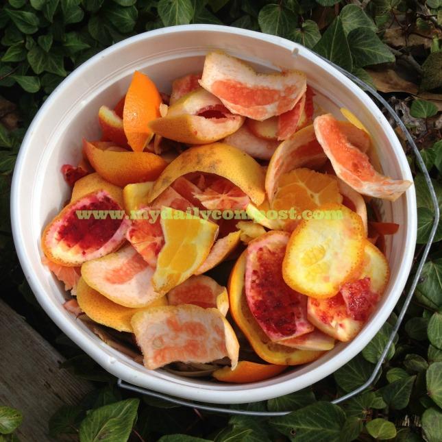citrus salad 3.3.14