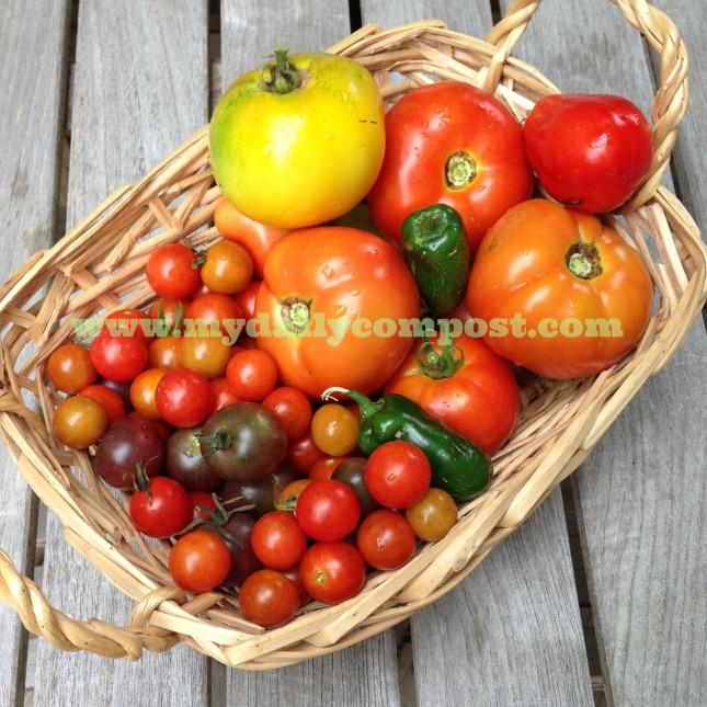 tomato basket 7.2014