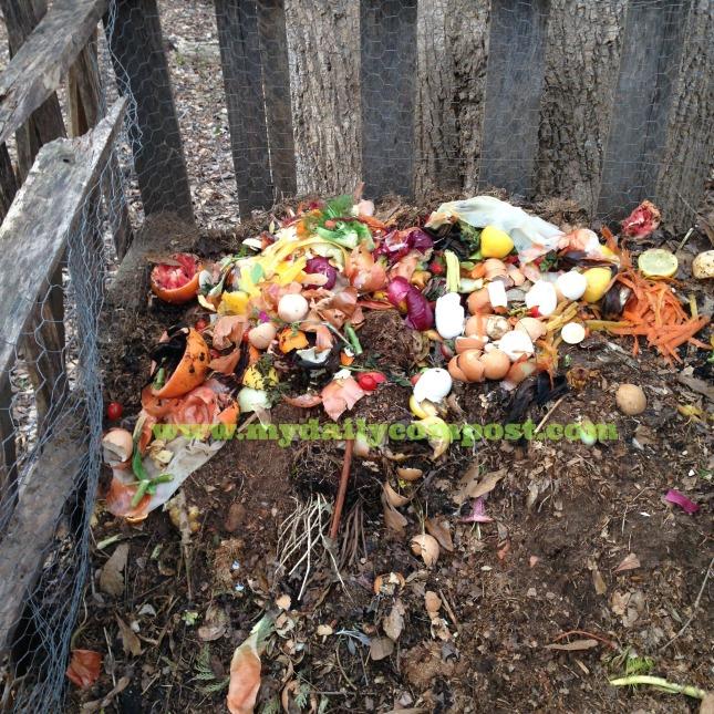 compost pile feb 2015