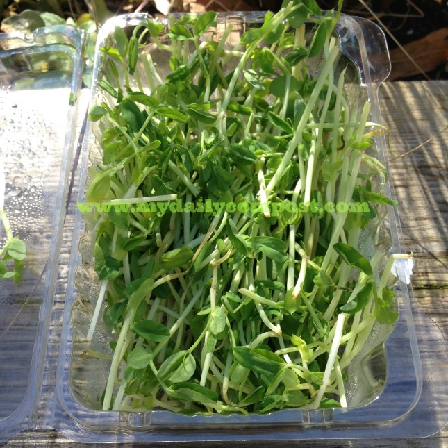 Toss It Tuesday Pea Shoots 2.10.15